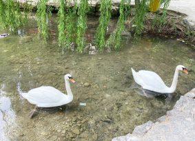 Flora-and-fauna-on-Krka-national-park